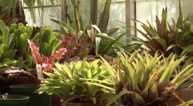 Department of Biology Greenhouse video