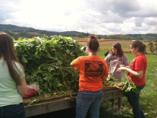 Photo of RU students gleaning