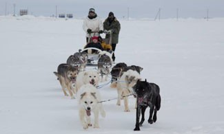 Geoff Caroll takes Andrew Cohen, Sarah Montgomery, and Jessi Basham on a dog sled ride.