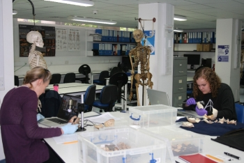 Dr. Donna Boyd (left) and student Kimber Cheek at the Centre for Anatomy and Human Identification at the University of Dundee, Scotland. There, they analyzed infant cranial remains from the Scheuer Collection, the largest collection of skeletonized juvenile remains in the world.