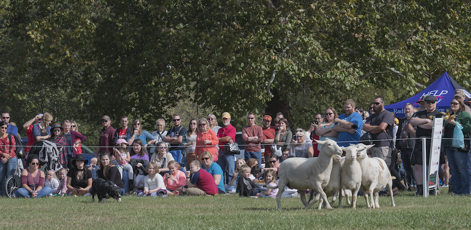 Guests watch the sheepherding event at the 2017 Highlanders Festival.