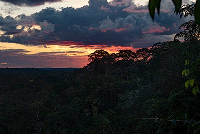 Sunset above the rainforest canopy.