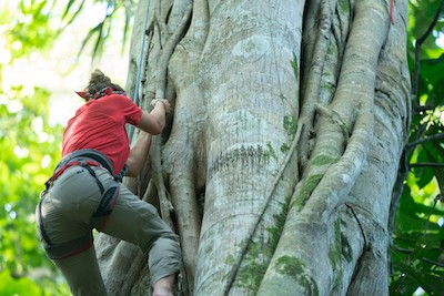Schoettinger climbs an 85-foot tree on RARE's second day in the jungle.